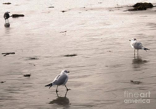 Gregory Dyer - Shore Birds - 01