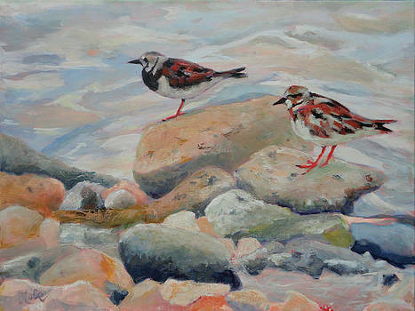 Shore Birds  Ruddy Turnstones by Jude Lobe