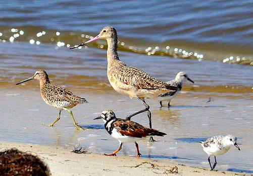 Shorebirds by Amber Bobbitt
