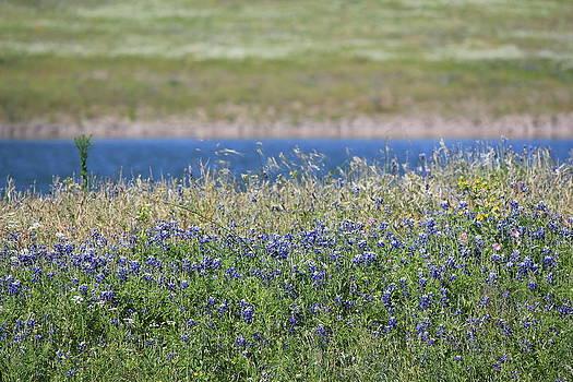 Shoreline Bluebonnets by Rod Andress