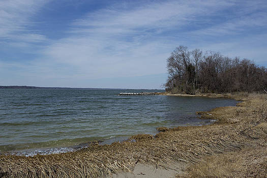 Shoreline on the Patuxent River by Terry Thomas