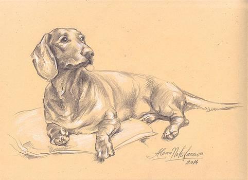 Short-haired dachshund on a pillow by Alena Nikifarava