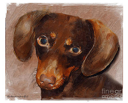 Short-haired Dachsund by Margie Middleton