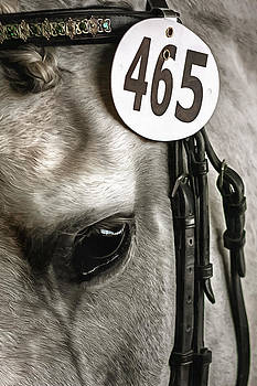 Show Pony by CarolLMiller Photography