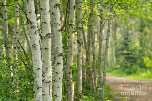 Alanna DPhoto - A Tree Lined Path