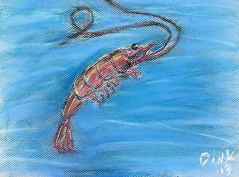 Shrimp by Dink Densmore