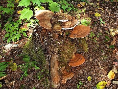 Shroom Tree by Gene Cyr