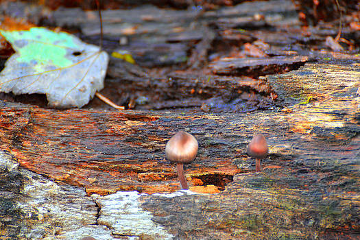 Shrooms by Marilyn Holkham
