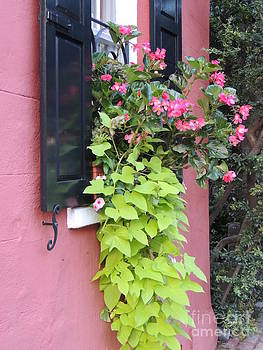 Shutter and Flower  by Diane Greco-Lesser
