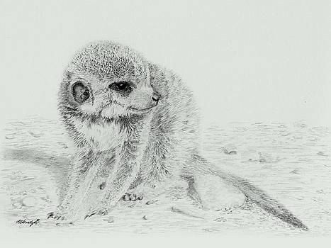 Shy Baby by Wendy Brunell