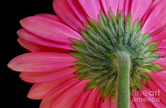 Shy Flower by Dan Holm