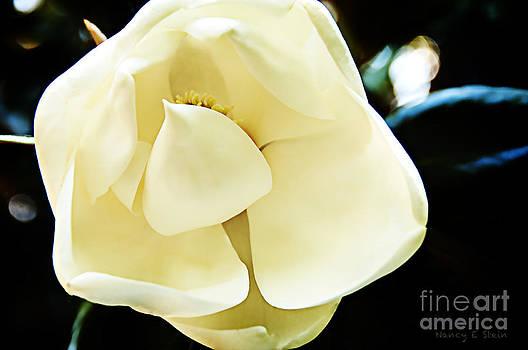 Nancy Stein - Shy Magnolia