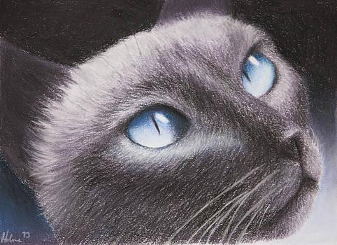 Siamese Cat by Helene Schmittgen