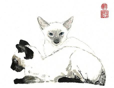 Siamese Cats by Terri Harris