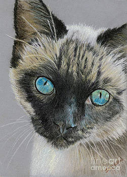 Siamese by Jan Gibson