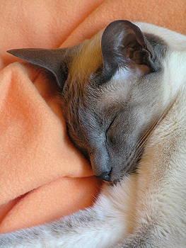 Margaret Saheed - Siamese Snooze 3