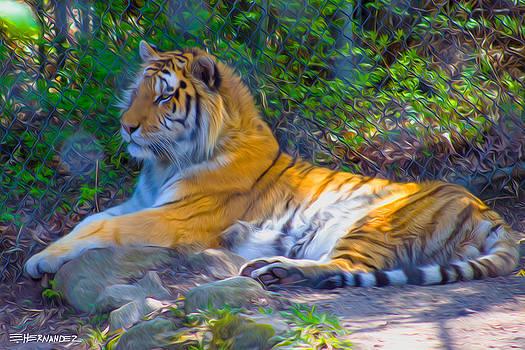 Siberian Tiger at Beardsley Zoo by Ed Hernandez