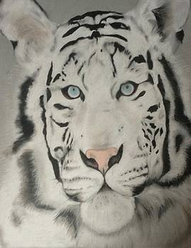 Siberian Tiger by Caitlin Mitchell