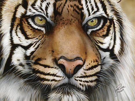 Siberian Tiger Closeup by Wayne Pruse