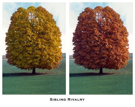 Sibling Rivalry by Lorenzo Laiken
