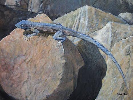 Sandra Lytch - Side Blotched Lizard on Rock