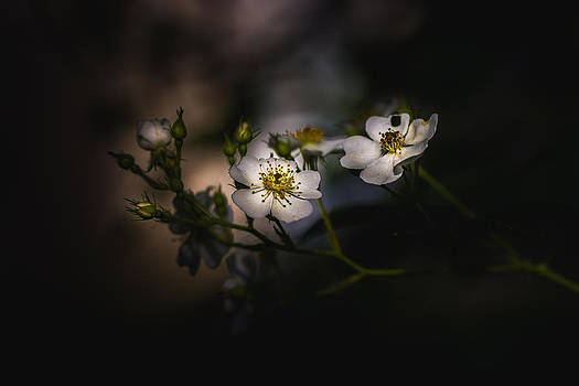 Side By Side by Paul Barson