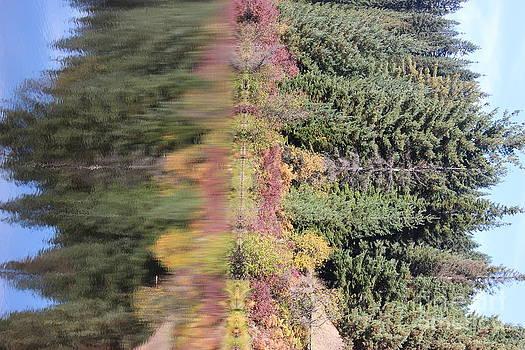Sideways fall colors kalideoscope Elk River Idaho by Linda Meyer