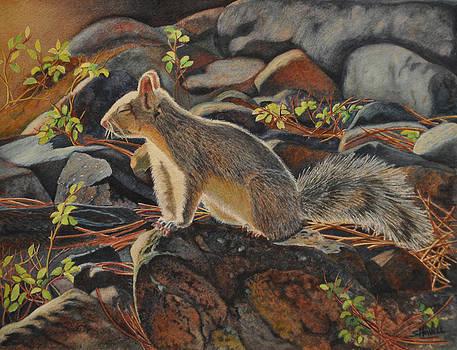 Sierra Siesta by Sandi Howell