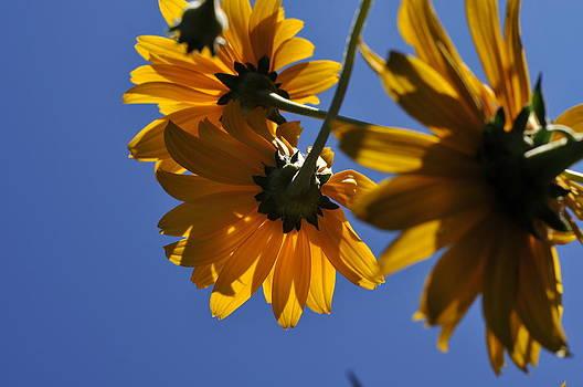 Sight Up Of A Flower by Ken Wilson