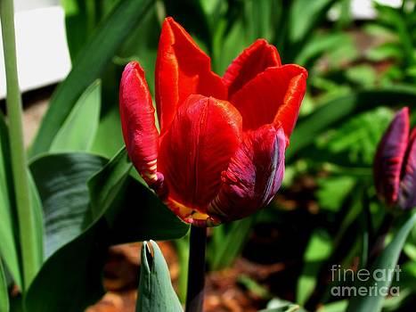 Sign of Spring by Galina Khlupina