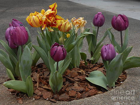 Signs of Easter by Timothy Fleming