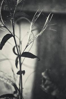 Silence 1 by Valentina Bunic