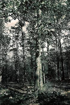 Nina Fosdick - Silence of Leaves