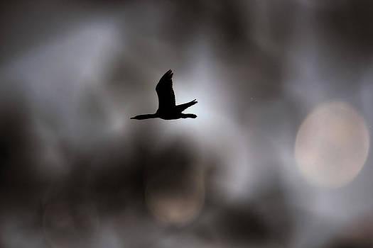 Joe Bledsoe - Silent Silhouette