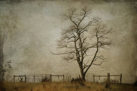 Silent Solitude by Kathy Jennings