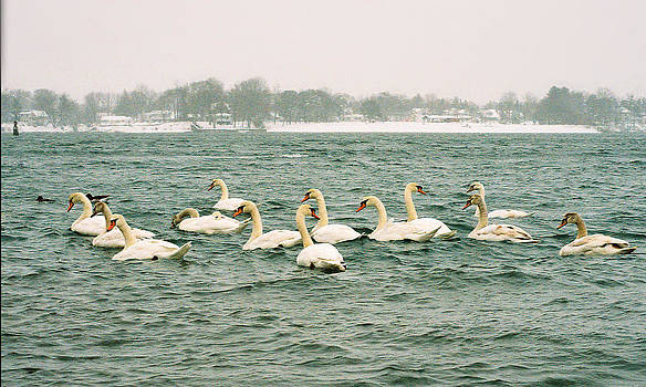 Silent Swans by William Walker