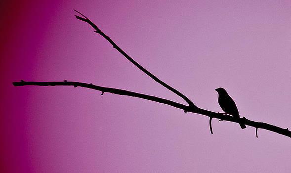 Silhouette in Purple by Elizabeth Richardson