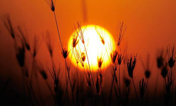 Silhouette of grass by Jordan Lye