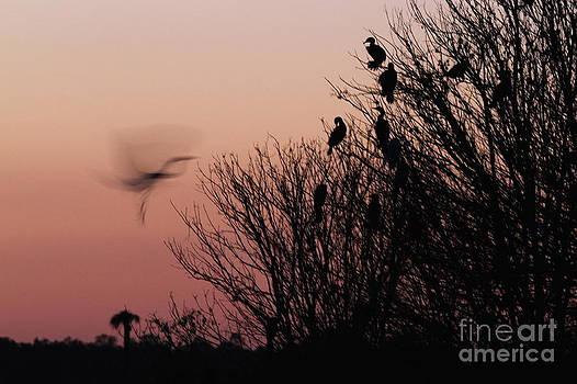 Silhouette of Great Egret by Jennifer Zelik