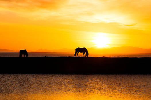 Silhouette of horses by Thorir Bjorgvinsson