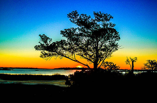 Silhouette Tree Sunrise by Ed Roberts