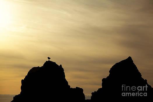 Charmian Vistaunet - Silhouetted Sea Gull