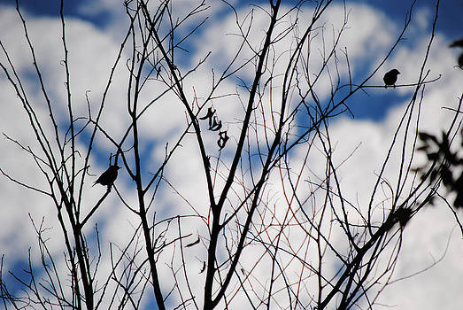 Silhouettes by Stephanie Thomson
