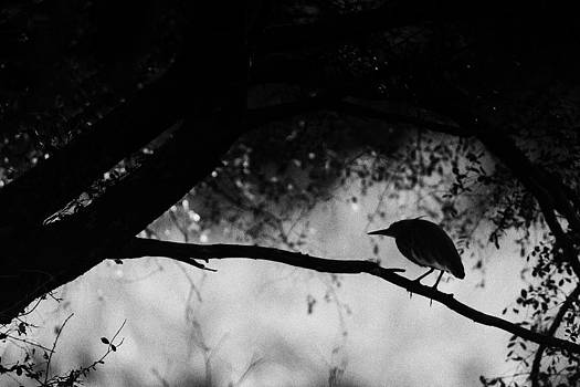 Silhouettes by Swapnil Deshpande