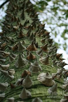 Silk Floss Tree by Crissy Boss