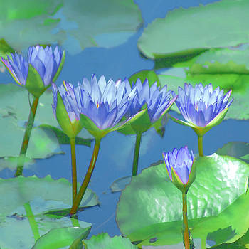 Silken Lilies by Holly Kempe