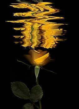 Susan Leake - Silken rose
