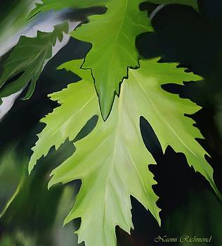 Naomi Richmond - Silver Leaf Maple Leaves