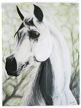 Silver Shadow by Lisa Nadler