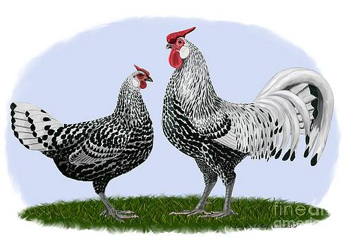 Silver Spangled Hamburg Rooster and Hen by Leigh Schilling